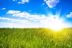 Sunset sun and field of green fresh grass Stock Photos
