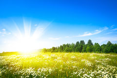 Sunset sun and field of green fresh grass Royalty Free Stock Photos