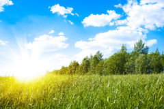 Sunset sun and field of green fresh grass Royalty Free Stock Photo