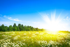 Sunset sun and field of green fresh grass. Under blue sky Royalty Free Stock Image