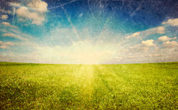 Sunset sun and green grass field Royalty Free Stock Photo