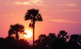 Sunset. Sun landscape sugar-palm sky evening stock image