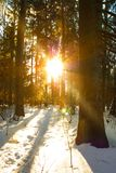 Sunset Sun With Natural Sunlight And Sun Rays Through Trees In W Stock Images