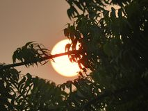 Sunset. A sun set behind tree leves royalty free stock photography