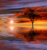 Sunset. The sun setting behind a tree Royalty Free Stock Photos