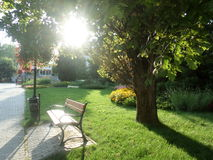 Sunset. Sun shining through the tree, Heviz, Hungary Stock Photography