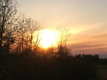 Sunset. Sun slowing going behind the trees Royalty Free Stock Photography