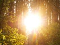 Sunset Sunbeams. Royalty Free Stock Image