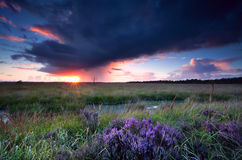 Sunset sunbeams over swamp with heather Royalty Free Stock Photo