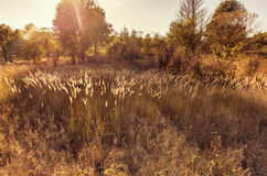 Sunset Sunlight over fall meadow, Autumn Nature. Sunbeams shining on meadow at fall time Royalty Free Stock Photos