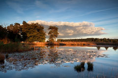 Sunset sunlight over wild lake with water lilies Royalty Free Stock Images