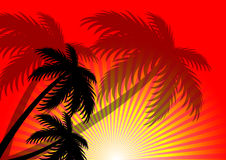 Sunset sunlight summer vector background Royalty Free Stock Images