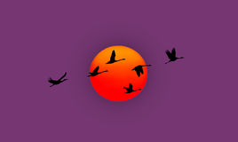 Sunset or sunrise with flying birds natural background Royalty Free Stock Image