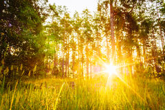 Sunset Or Sunrise In Forest Landscape. Sun Sunshine With Natural stock photo