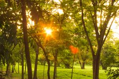 Sunset Or Sunrise In Forest Landscape. Sun Sunshine With Natural Sunlight And Sun Rays Through Woods Trees In Summer Spring Forest.  stock photography