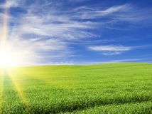 Sunset or sunrise in the  green field Stock Photo