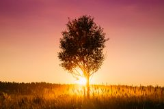 Sunset Sunrise In Misty Autumn Meadow Landscape With Lonely Tree royalty free stock photography