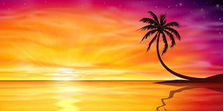 Sunset, Sunrise with Palm Tree Stock Image