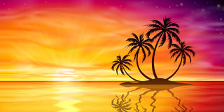 Sunset, Sunrise with Palm Tree Royalty Free Stock Images