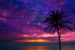Sunset sunrise palm tree over Mediterranean Stock Photos