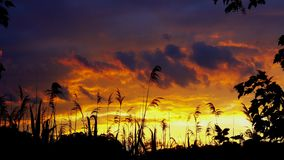 Red sky sunset clouds reed wind Stock Photography