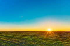 Sunset, Sunrise, Sun Over Rural Countryside Wheat Field. Spring Royalty Free Stock Photography