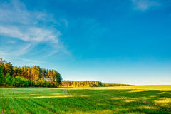 Sunset, Sunrise, Sun Over Rural Countryside Wheat Field. Spring Royalty Free Stock Photo