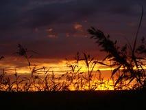 Sunset. On the lake Royalty Free Stock Image