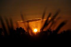 Sunset. S coucher de soleil cocotree cocotrees cocotiers haiti richarson dorvil sun clouds nature sunrise sunrises Royalty Free Stock Images