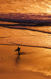 Sunset surfer. Surfer leaving the surf at sunset ,Cornwall UK royalty free stock photo