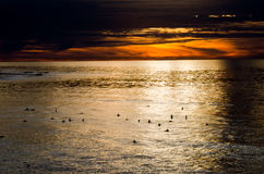 Sunset Surfers. Surfers waiting for a perfect wave Royalty Free Stock Photography