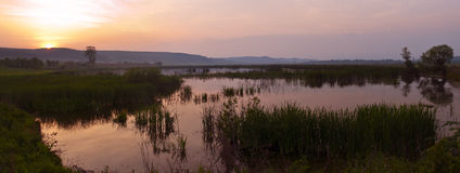 Sunset on swamp Royalty Free Stock Photos