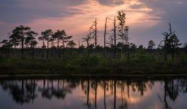 Sunset in  swamp lake Royalty Free Stock Photo