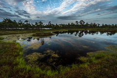 Sunset in  swamp lake Stock Photography