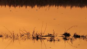 sunset on swamp stock footage