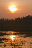 Sunset on swamp in Terai, Bardia, Nepal Stock Photography
