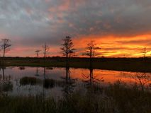 sunset in the swamps off florida royalty free stock photos