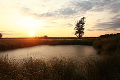 Sunset in swampy field Stock Photo