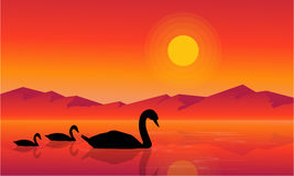 At sunset swan scenery on lake silhouettes Royalty Free Stock Photos