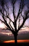 sunset sylwetkowy drzewo. Zdjęcie Stock