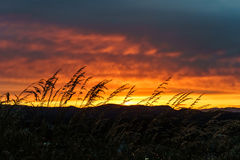 Sunset taken at Mount Tolmie in Victoria, BC. Canada Royalty Free Stock Photography