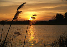 Sunset with tall grass. Tall grasses in silhouette against a beautiful sunset over a lake stock photo