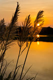 Sunset with tall grass Royalty Free Stock Image