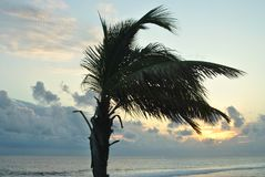 Palm tree moved by the wind. Sunset in Reunion island. royalty free stock image