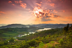 Sunset in the tea field Royalty Free Stock Photo