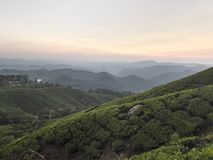 Sunset at a tea plantation Stock Image