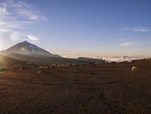 Sunset (Tenerife, Canary Island). Volcanic landscape - stone - sand - hills - blue sky - sunny Royalty Free Stock Photo
