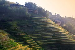 Sunset terraced fields in Longsheng,China Stock Photo