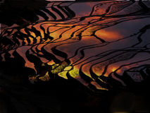 Sunset at terraced rice fields, China Royalty Free Stock Image
