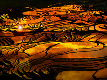 Sunset at terraced rice fields, China Royalty Free Stock Photo